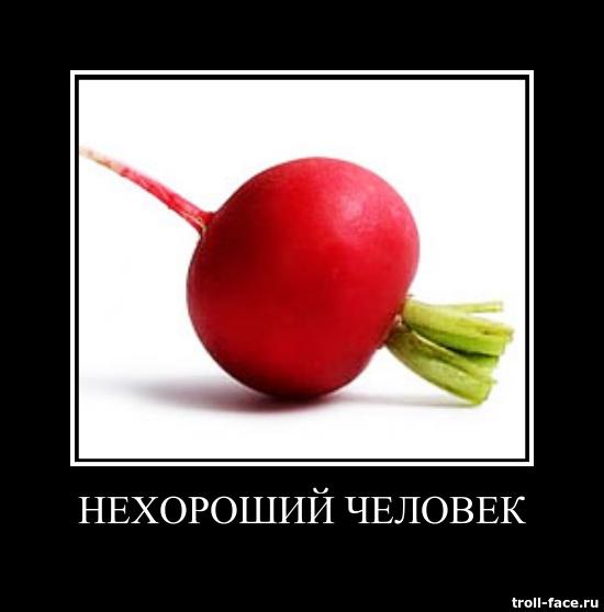 u_13518d4d9bc7e5a2e401422aaf04823f_800.jpg